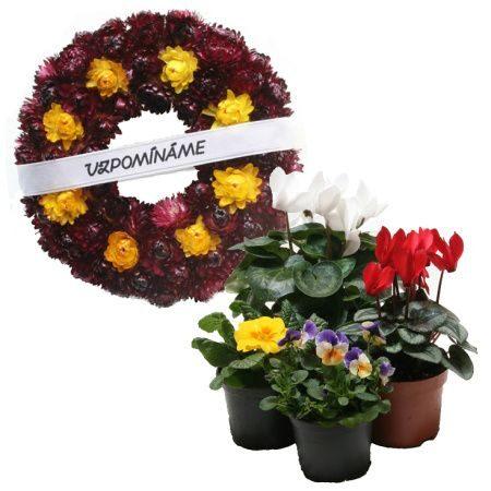 Sezónní hrnkové rostliny a dekorace