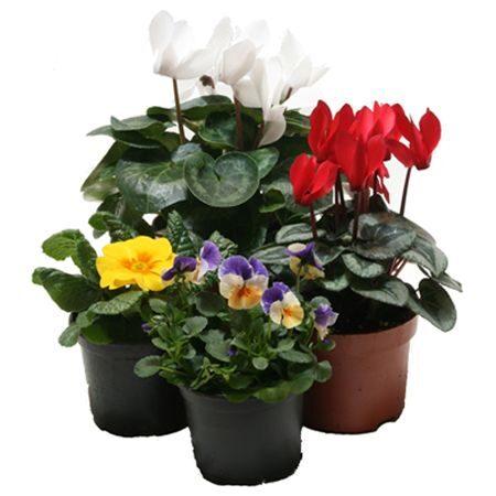 Hrnkové rostliny