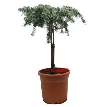 Okrasné dřeviny, trvalky, bylinky, popínavé, vodní a bahenní rostliny, okrasné trávy, skalničky