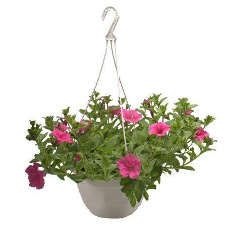 Balkónové rostliny, letničky, sadba zeleniny, sazenice jahod